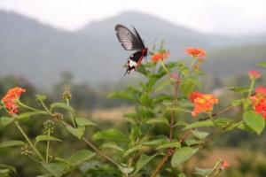 Flora und Fauna waren wirklich sehenswert, u.a. sahen wir oft herrlich große Schmetterlinge.